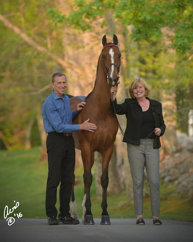 Salem Farm - Breeders of World Champion Morgans and Saddlebreds