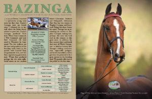 Bazinga - The Morgan Horse Jan 2017
