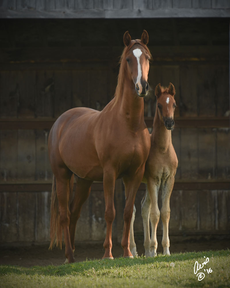 Schnazzy & 2016 Foal
